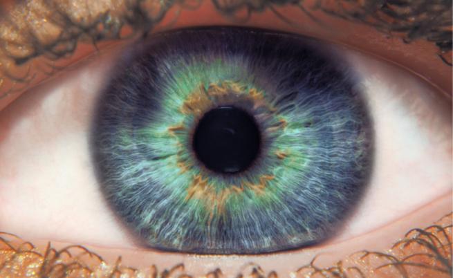 Quali sono i cibi che fanno bene agli occhi?