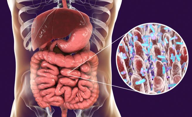 dieta dei tre giorni per riequilibrare la flora batterica intestinale