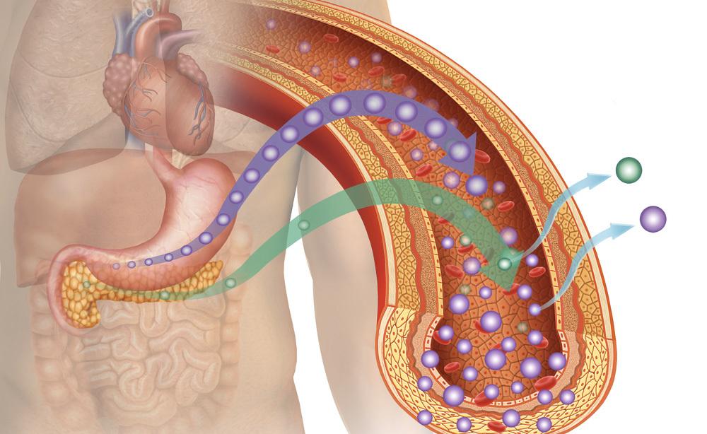 Diabete e Apnee Notturne: ecco qual è il Legame