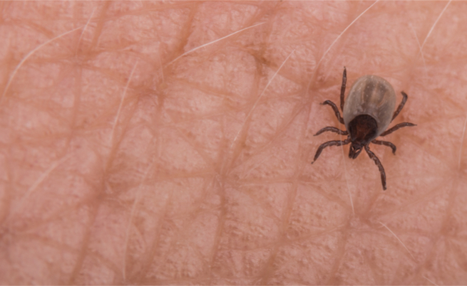 Quali sono le malattie trasmesse dagli insetti?