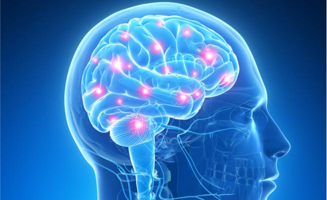 curiosità sul cervello: le cose che non sappiamo su questo misterioso organo