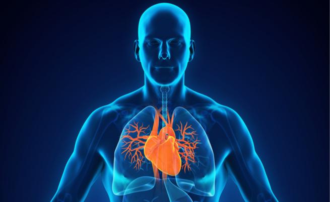 benefici del mango: protegge il cuore e l'intestino