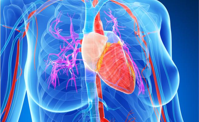 I benefici della frutta secca per il cuore