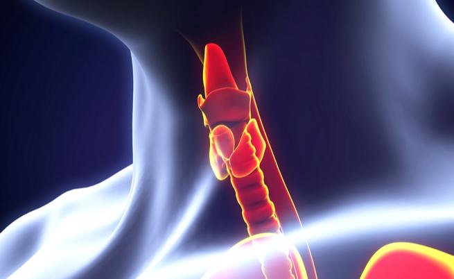 perturbatori endocrini: le sostanze che causano malattie ormonali