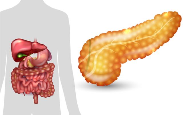 Si può vivere senza pancreas?
