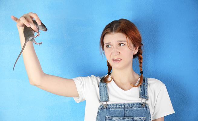 Paura dei topi: come affrontarla e superarla