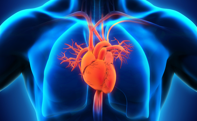 cibi che fanno bene al cuore: qual è la dieta del cuore perfetta?