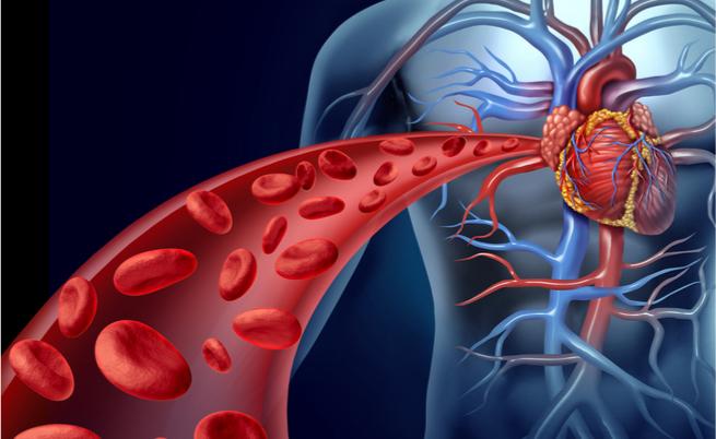 Tutte le cause degli enzimi cardiaci alti: dall'infarto del miocardio allo sforzo intenso