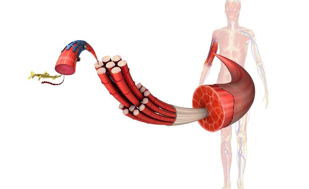 sodio e muscoli: i benefici per la salute