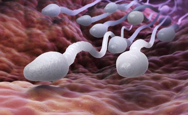 Cosa si nasconde nello sperma