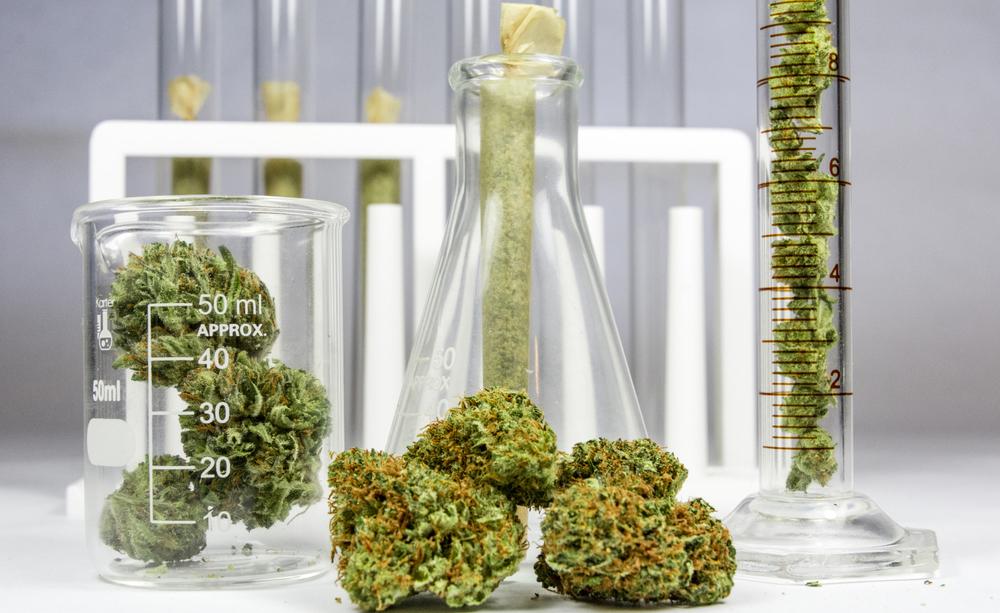cannabis: ecco cosa dice la nuova proposta di legge sul suo uso terapeutico
