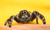 Mal di testa causato da un ragno nell'orecchio: ecco tutte le cause più strane