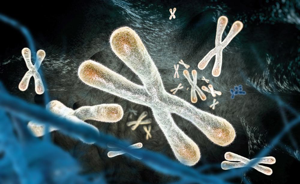 bresaola: i benefici delle proteine