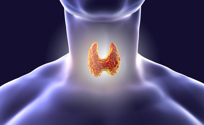I cibi amici della tiroide: ecco quale alimentazione seguire se si soffre di disturbi alla tiroide