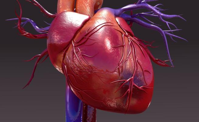 malattie cardiovascolari: come affrontare al meglio l'estate