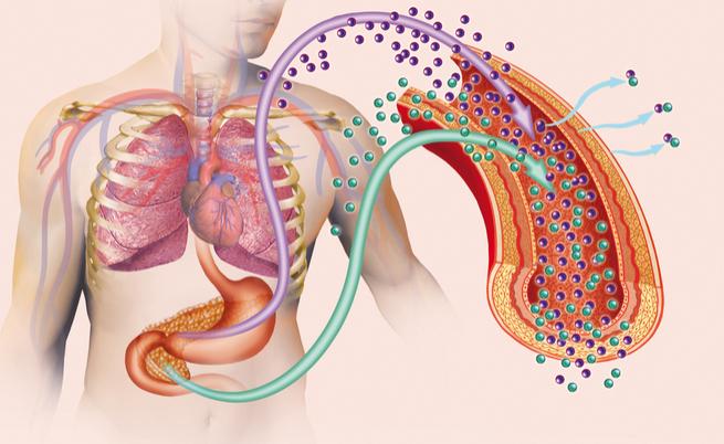 Combattere il diabete con le fibre