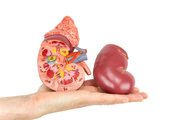 Come curare l'insufficienza renale