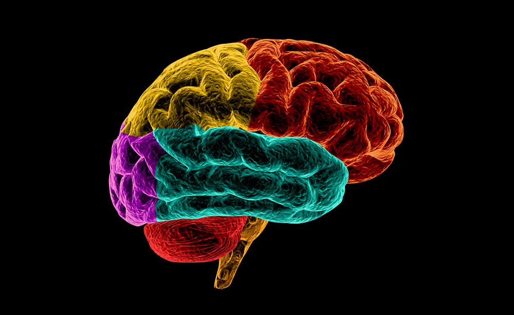 cervello e Parkinson: come riattivare i neuroni