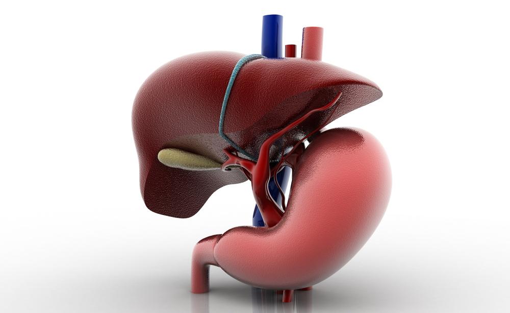 fegato grasso: le cause e come trattarlo con un batterio