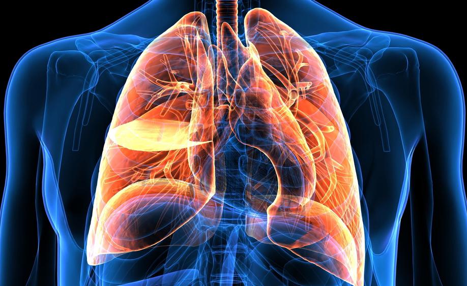 polmoni e produzione di sangue