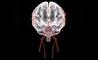 beriberi: quello che c'è da sapere sulla malattia