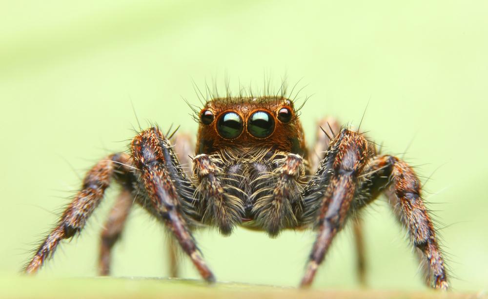 veleno dei ragni per combattere l'ictus