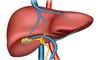 gli alimenti salutari per il fegato e quelli che fanno male