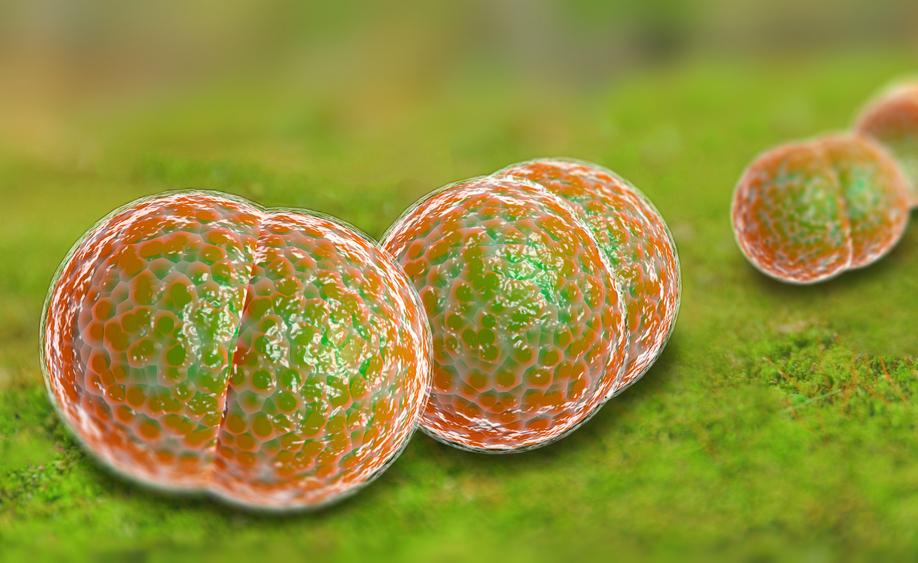 meningite: i sintomi e le cure della malattia