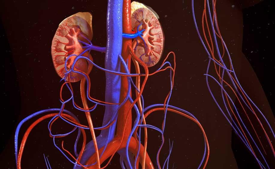 Azotemia e creatinina alte spia di insufficienza renale
