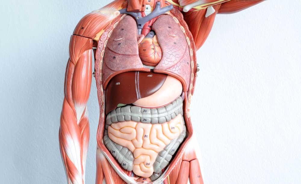 trapianto di organi e cellule staminali