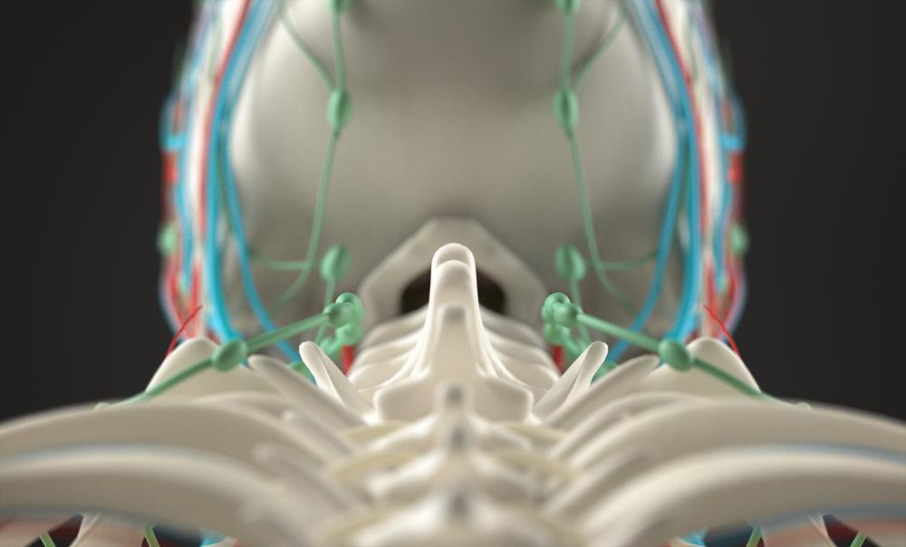 colonna vertebrale: i tipi di intervento