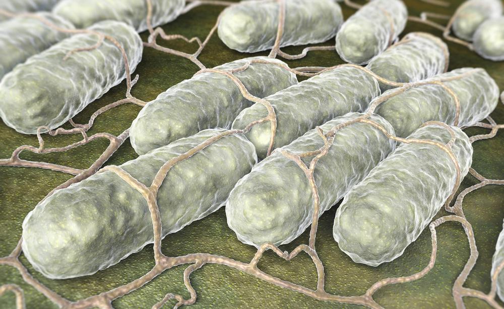 salmonella: come si contagia