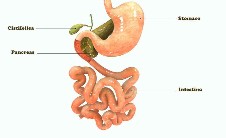 celiachia: i sintomi