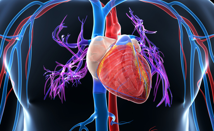 insufficienza cardiaca: le cause