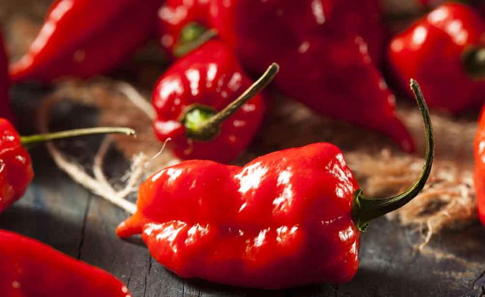 Bhut Jolokia: i rischi del peperoncino