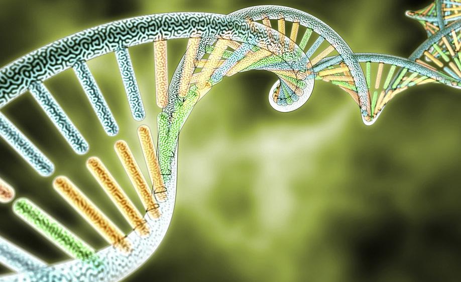 genetica: le sue applicazioni in medicina
