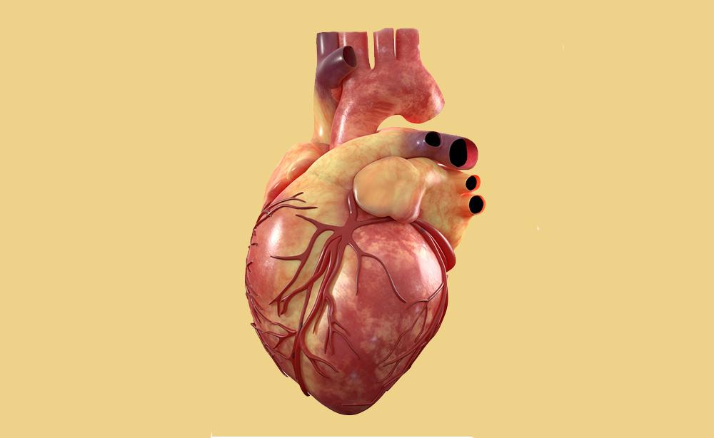 cuore: il primo battito