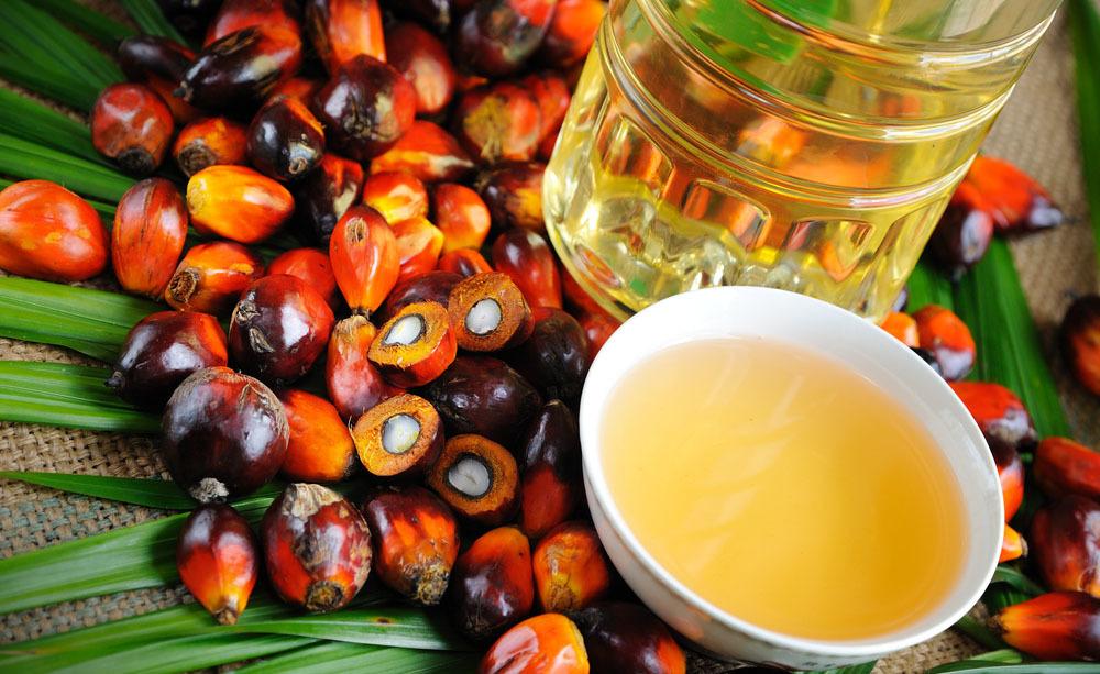 Olio di palma: i pro e i contro