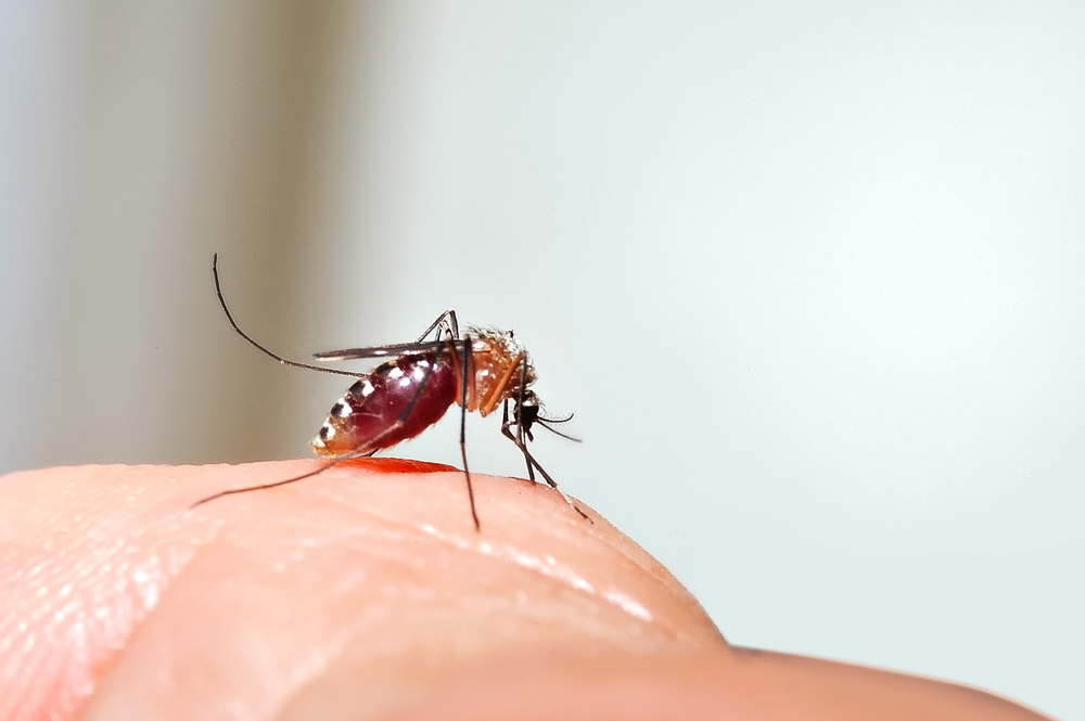 Zanzare puntura