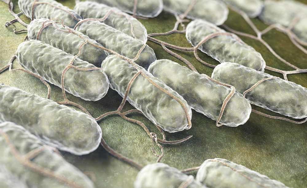 I batteri nel cibo