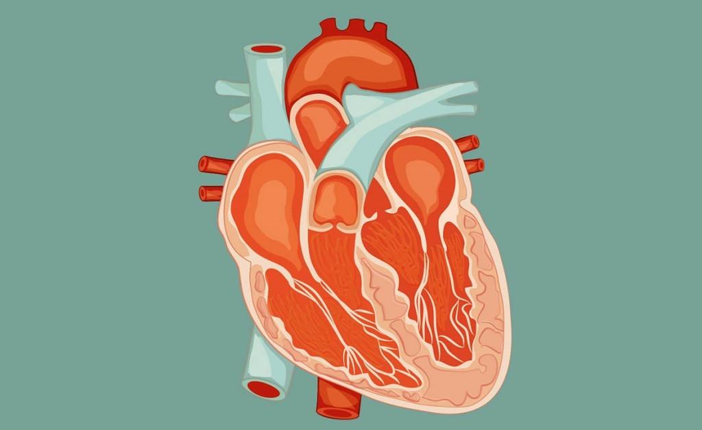 miocardite: le cause dell'infiammazione al cuore