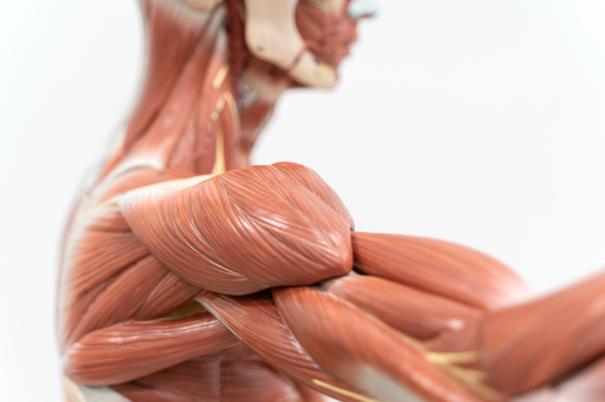 massa muscolare e vitamina c: il legame