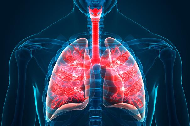 anatomia-dei-polmoni-umani
