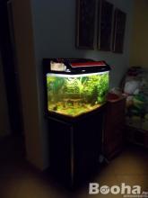 100 literes, állványos akvárium kpl. eladó