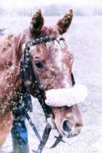 Téli akciós lovas bérlet