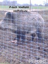 vadháló,vadriasztó huzal,kerítésdröt,oszlop
