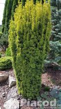 Tiszafa termelői áron kis és nagy tételben
