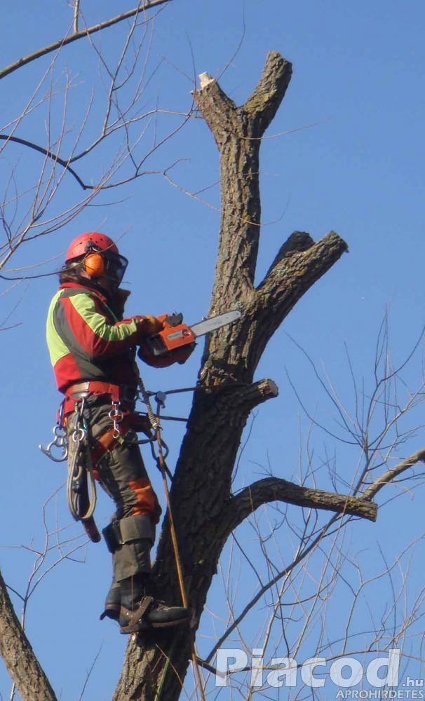 Fakivágás veszélyes fák kivágása a Balaton déli partján
