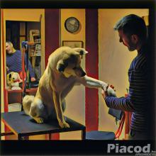 Kutya és cicakozmetika Budapesten