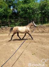 Terápiás lovagoltatás,lovas edzés